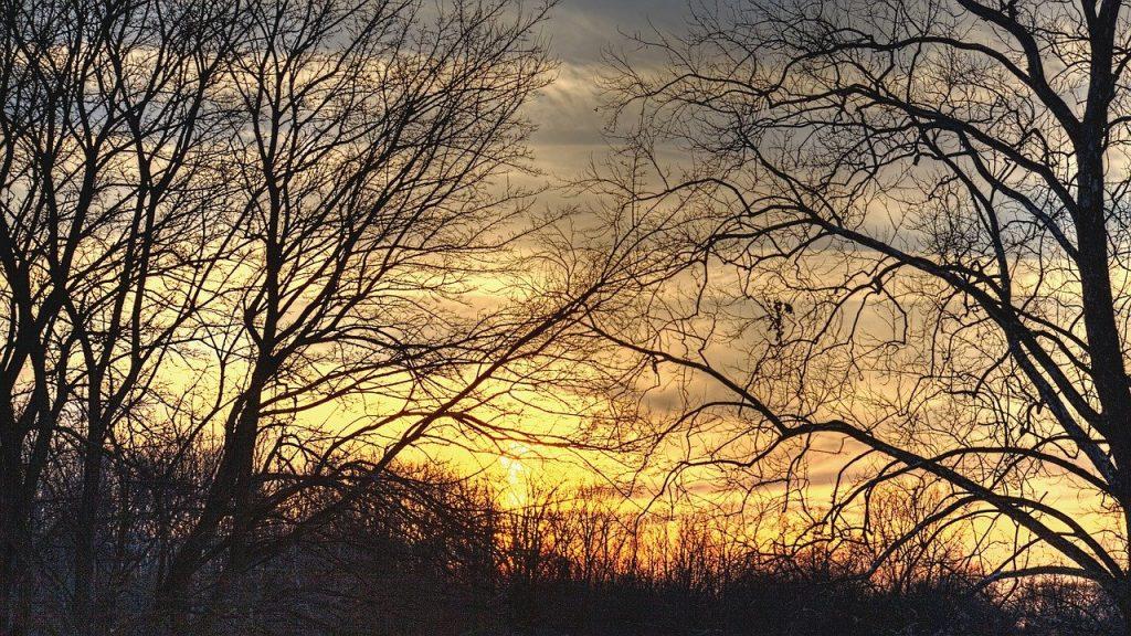 sunset, scenery, trees