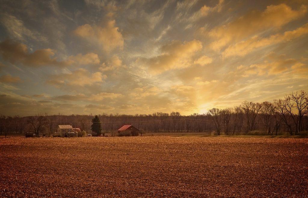 sunrise, scenery, trees