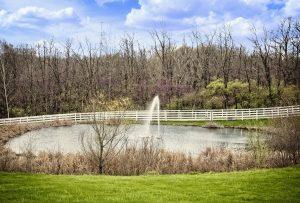 pond, scenery, trees
